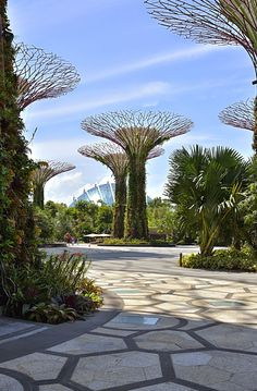 The Kontemporary - Just another Blog: Travel: Gardens by the Bay