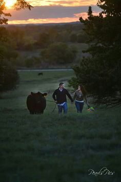 Cattle Engagement Photo. Sunset walk with your favorite show heifer. #stockshowlife