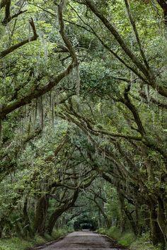 Edisto Island, South Carolina.