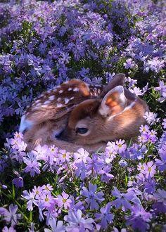baby deer resting in purple flowers Cute Little Animals, Cute Funny Animals, Cute Dogs, Cute Babies, Cute Creatures, Beautiful Creatures, Animals Beautiful, Nature Animals, Animals And Pets