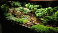 Now this is a lovely miniature garden that's set up like a forest. But though there's not much undergrowth under the bonsais, I'm sure the rocks give it a more realistic touch.