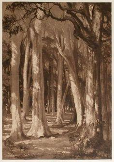#Henri van Raalte (Aus., 1881-1929) A Karri Tree Glade, c1919. Aquatint, Repin me!
