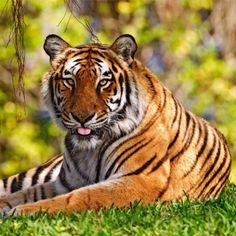 Visit the Louisville Zoo