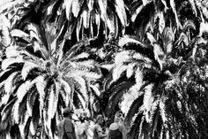 Fotografía analógica, en blanco y negro, de artista anónimo.