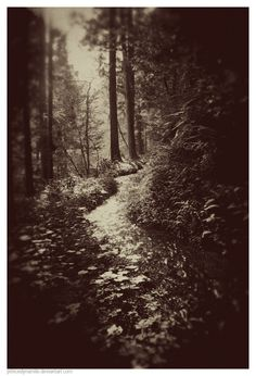 Lost forest.. #vintage #photography #forest #fairies