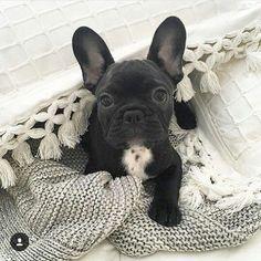 Such a precious litt