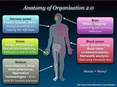 Anatomy organisation 2.0