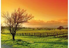 Fototapete Weinlandschaft
