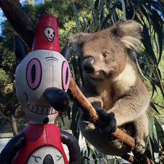 GOODBYE AUSTRALIA! Toby had to hug one more KOALA before he left! @HealesvilleSanctuary #HealesvilleSanctuary #emu #toby #tobylovesyou #tobystravels #melbourne #australia #oz #downunder #garybaseman #baseman #koala  #love #viciouslove Thank you @semipermanent for giving me the opportunity to bring my story to Australia! #semipermanent
