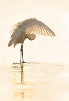 ⓕurry & ⓕeathery ⓕriends - photos of birds, pets & wild animals - Great Egret, Moronis sea, Crete Pretty Birds, Love Birds, Beautiful Birds, Animals Beautiful, Cute Animals, Tier Fotos, Mundo Animal, Nature Animals, Wild Animals
