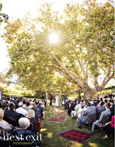 I need a place like this!!! Why is it so hard to find grass and a huge tree?! And enough seating... Ugh