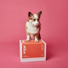 Ollie delivers fresh, healthy dog food made with real, human-grade ingredients, tailored to your pup's unique nutritional needs. Dog Food Delivery, Meal Delivery Service, Best Dog Food, Best Dogs, Yorkies, Dog Raw Diet, Natural Dog Food, Real Dog, Homemade Dog Food
