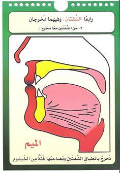 مخارج الحروف العربية للدكتور/أيمن سويد - الصفحة 3