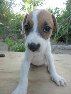 Voy a donar U$12 a una fundación protectora de animales por U$6