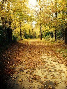 10 hiking in wilkes nc ideas hiking wilkesboro wilkes county 10 hiking in wilkes nc ideas hiking