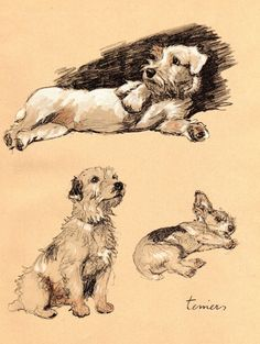1934 Vintage Dog Print Terriers Cecil Aldin by AntiquarianPrints, $25.00