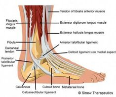 Ankle Injuries Ankle Pain Information - Sinew Therapeutics