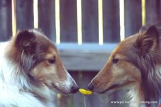 Isa and Oso- photo by Melissa Bain