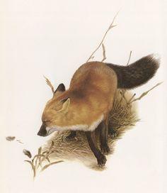 Canadian Wildlife Painter