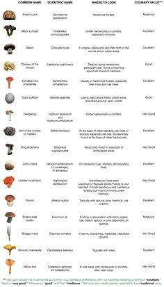 Mushrooms that can be found via foraging.You can find Mushroom hunting and more on our website.Mushrooms that can be found via foraging. Edible Wild Mushrooms, Garden Mushrooms, Growing Mushrooms, Stuffed Mushrooms, How To Grow Mushrooms, Culture Champignon, Mushroom Identification, Plant Identification, Mushroom Hunting