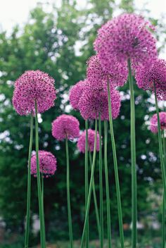 Some of the earliest pollinator-friendly flowers you can grow come from bulbs that you need to plant in the fall. These varieties are some of the first food sources for bees, beetles, and other important insects in spring. Plus, these flowers will provide some much-needed color in your garden after a long winter. #springbulbs #bestflowersforbees #pollinatorgarden #bhg Bloom, Flower Landscape, Plants, Cool Plants, Beautiful Flowers, Perennials, Seaside Garden, Flowers, Trendy Flowers