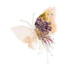 Butterfly by osoo