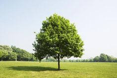 Signs of a Healthy Tree