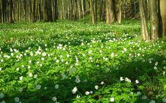 Поляна весенних цветов