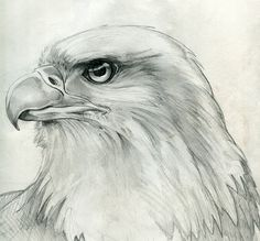 "Képtalálat a következőre: ""bald eagle drawing"" Pencil Drawings Of Animals, Bird Drawings, Bird Sketch, Eagle Sketch, Eagle Drawing, Pyrography Patterns, Color Pencil Art, Wildlife Art, Drawing Techniques"