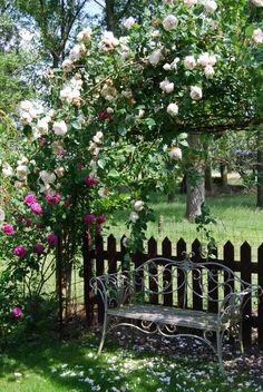 Mon Jardin Mes Merveilles: Petit tour du propriétaire                                                                                                                                                      Plus