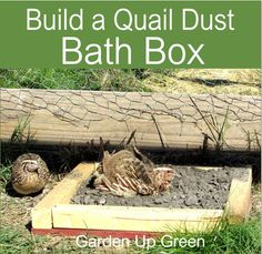 Build your own Quail Dust Bath Box. Build your own Quail Dust Bat Raising Quail, Raising Goats, Raising Chickens, Quail Pen, Quail Coop, Button Quail, Mini Farm, Garden Boxes, Garden Ideas