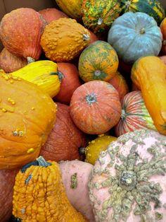 @Hanna: gourds