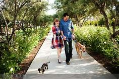 Couple w/dogs
