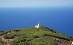 Isola del giglio - Vaccarecce