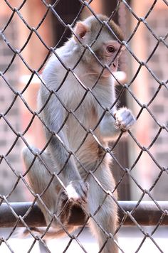 Best El mono est en la jaula