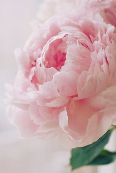 I'm falling in love with Pink Peonies.