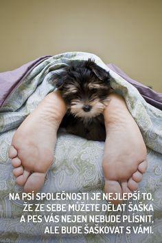 Máme rádi psy | Psi, Pejsci, Štěňátka, Hafíci a Mazlíčci na jednom místě! Psi, Dogs, Animals, Babies, Animales, Babys, Animaux, Infants, Animal Memes