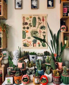 Care of succulents indoors Succulents network - Dekoration Ideen 2019 Cacti And Succulents, Cactus Plants, Cactus Pot, Cactus Decor, Suculentas Interior, Decoration Plante, Succulent Care, Plastic Pots, Decorating Rooms