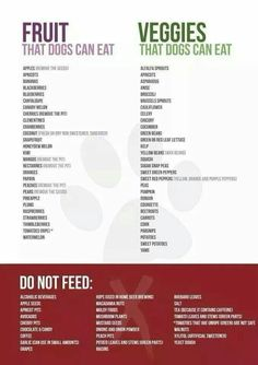 What and what not to feed your dog.