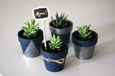Pots de succulents DIY, ou le parfait cadeau d'invités