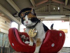 tama -- most famous cat in japan.  station master of kishi station wakayama railway 和歌山電鉄 貴志駅 『たま駅長』