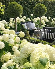 Garten deko ideen - Thank you for sharing my Hydrangea garden Welcome to all . Moon Garden, White Gardens, Garden Care, Green Garden, Back Gardens, Front Yard Landscaping, Landscaping Ideas, Garden Planning, Hydrangeas