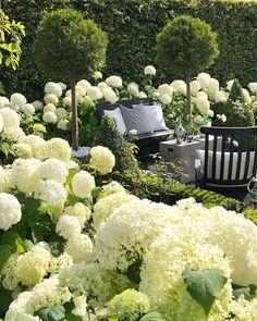 Garten deko ideen - Thank you for sharing my Hydrangea garden Welcome to all . Back Gardens, Outdoor Gardens, Garden Cottage, White Gardens, Garden Care, Front Yard Landscaping, Landscaping Ideas, Dream Garden, Garden Planning