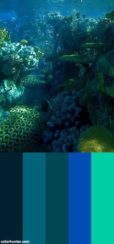 Finding+Nemo+Color+Scheme