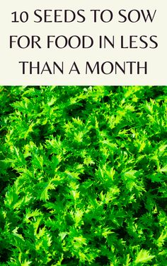 Gardening For Beginners, Gardening Tips, Gardening Vegetables, Planting Seeds, Planting Flowers, Fast Growing Vegetables, Home Vegetable Garden, Veggie Gardens, Edible Garden