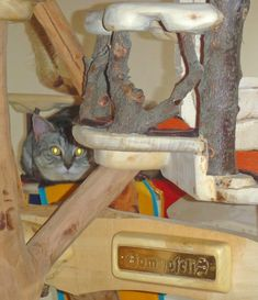 DomusfeliS - special playzones for cats - Unique pieces for unique cats, sculptures for cats, untreated precius wood: plum, apricot, seasoned poplar, birch, bamboo, oak and piracanta. #catcastle #cattower #catcondo #cattree #cattoy #petdesign #catenclosure #catscratch forniture #amazingcat scratching #felinelovers #cathome Funny Pets, Funny Animals, Plum Apricot, Cat Castle, Cat Enclosure, Cat Condo, Unique Cats, Cat Scratching, Cat Tree