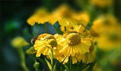Sommerblumen im August - Jahreszeiten - Galerie - Community