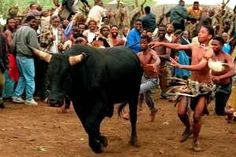 Every year, a bull is torn apart and beaten alive during a South African ritual. Sign this petition and demand that South African officials put an end to this annual act of animal abuse.