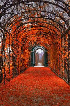 Autumn, Vienna, Austria Not exactly secret, but thought Rachael would love this.