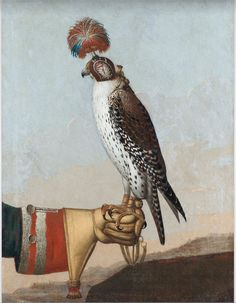 Islandic gerfalcon,1759 - unknown artist / The Royal Armoury, Sweden